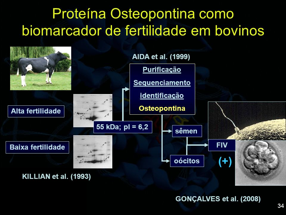 Proteína Osteopontina como biomarcador de fertilidade em bovinos