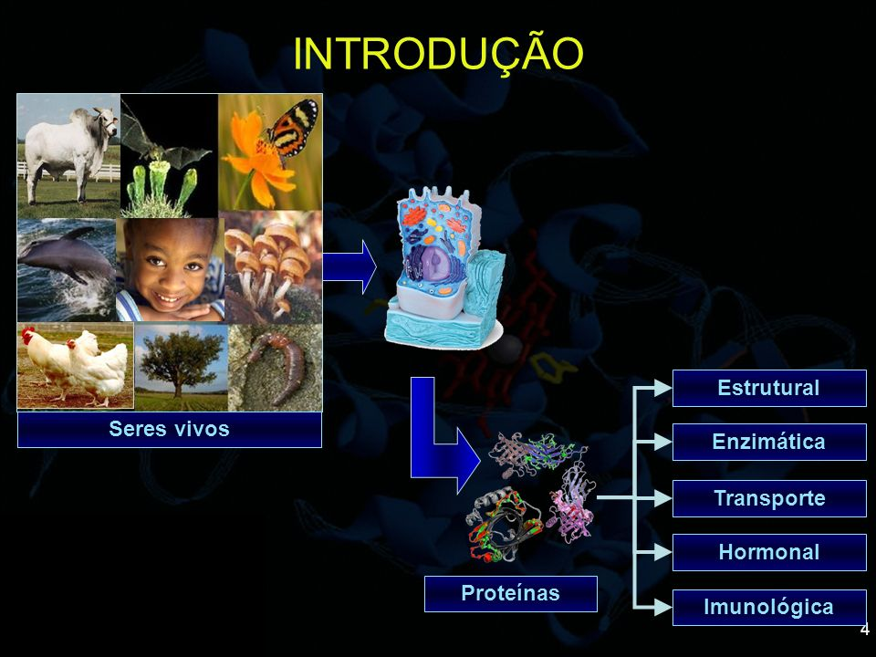 INTRODUÇÃO Estrutural Seres vivos Enzimática Transporte Hormonal