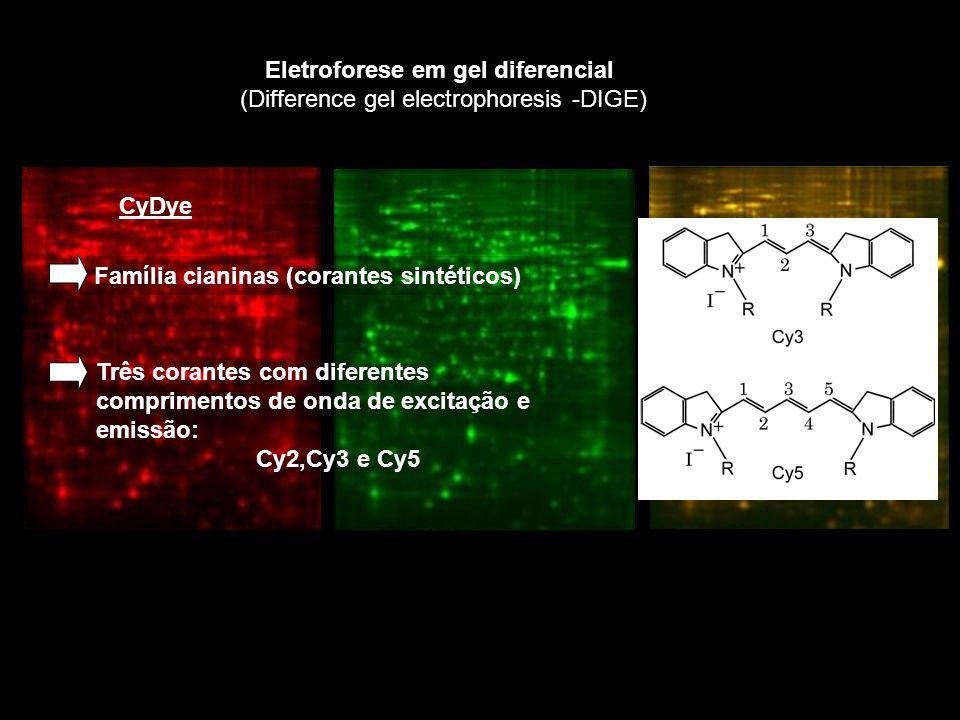 Eletroforese em gel diferencial (Difference gel electrophoresis -DIGE)