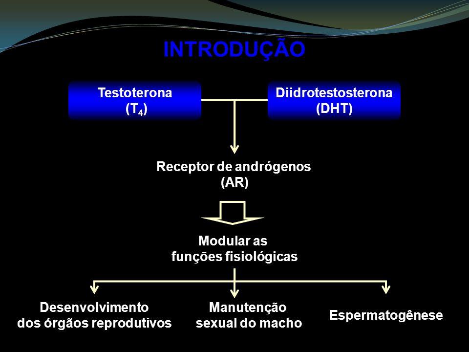 Receptor de andrógenos dos órgãos reprodutivos