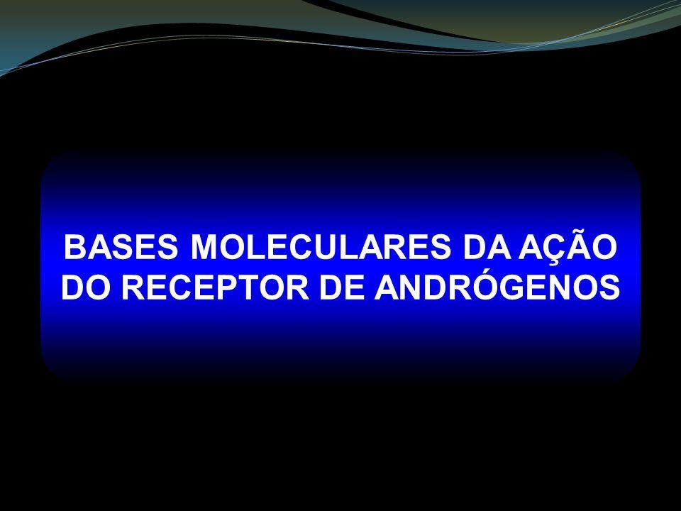 BASES MOLECULARES DA AÇÃO DO RECEPTOR DE ANDRÓGENOS