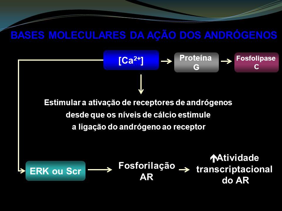 BASES MOLECULARES DA AÇÃO DOS ANDRÓGENOS