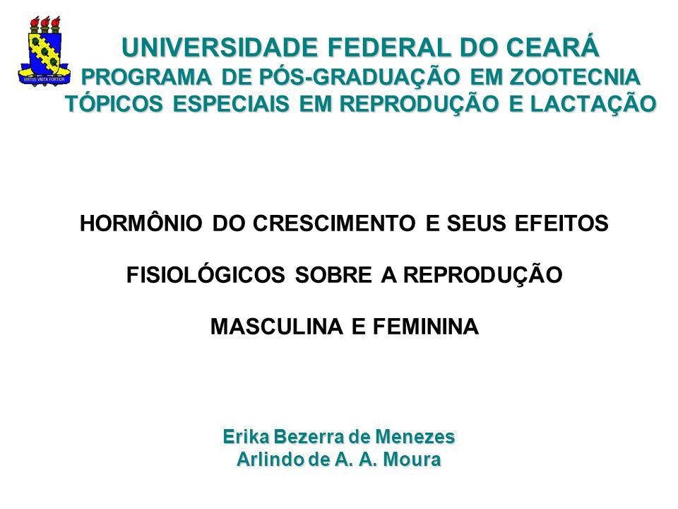 Erika Bezerra de Menezes Arlindo de A. A. Moura