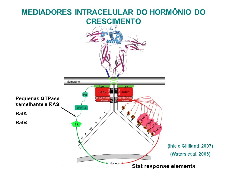 MEDIADORES INTRACELULAR DO HORMÔNIO DO CRESCIMENTO