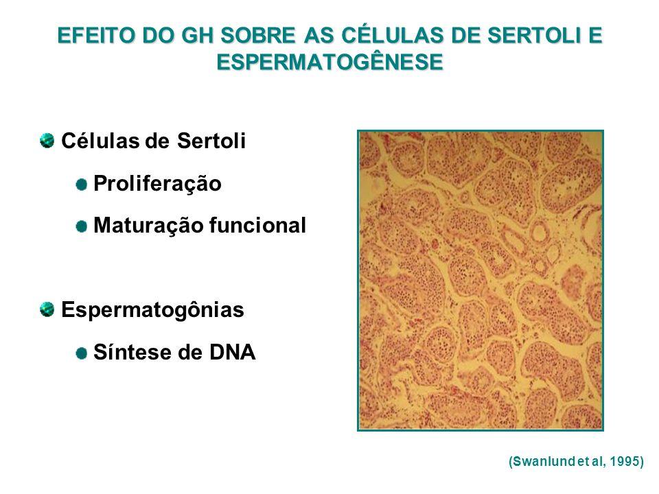 EFEITO DO GH SOBRE AS CÉLULAS DE SERTOLI E ESPERMATOGÊNESE