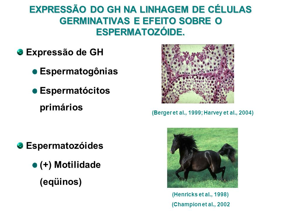 (Berger et al., 1999; Harvey et al., 2004)