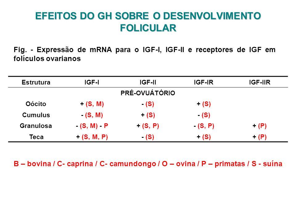 EFEITOS DO GH SOBRE O DESENVOLVIMENTO FOLICULAR