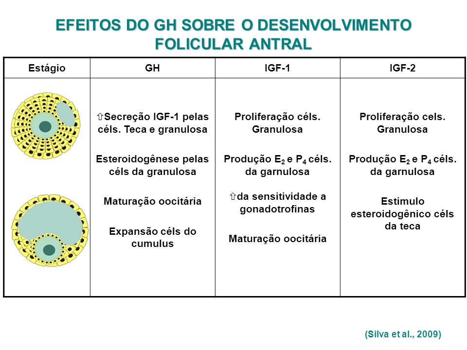 EFEITOS DO GH SOBRE O DESENVOLVIMENTO FOLICULAR ANTRAL