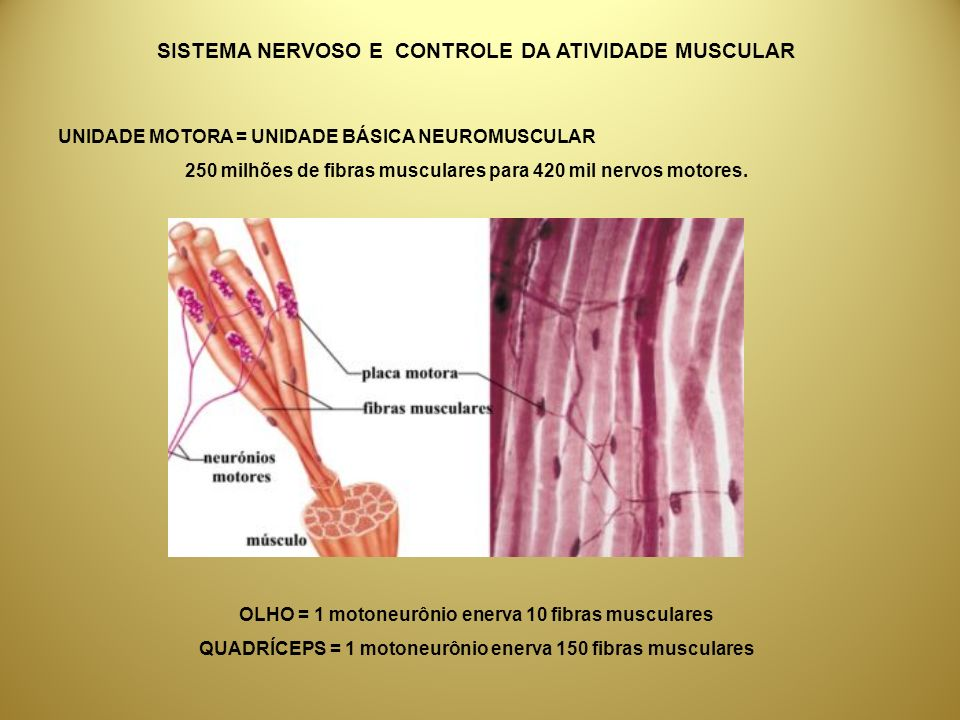SISTEMA NERVOSO E CONTROLE DA ATIVIDADE MUSCULAR