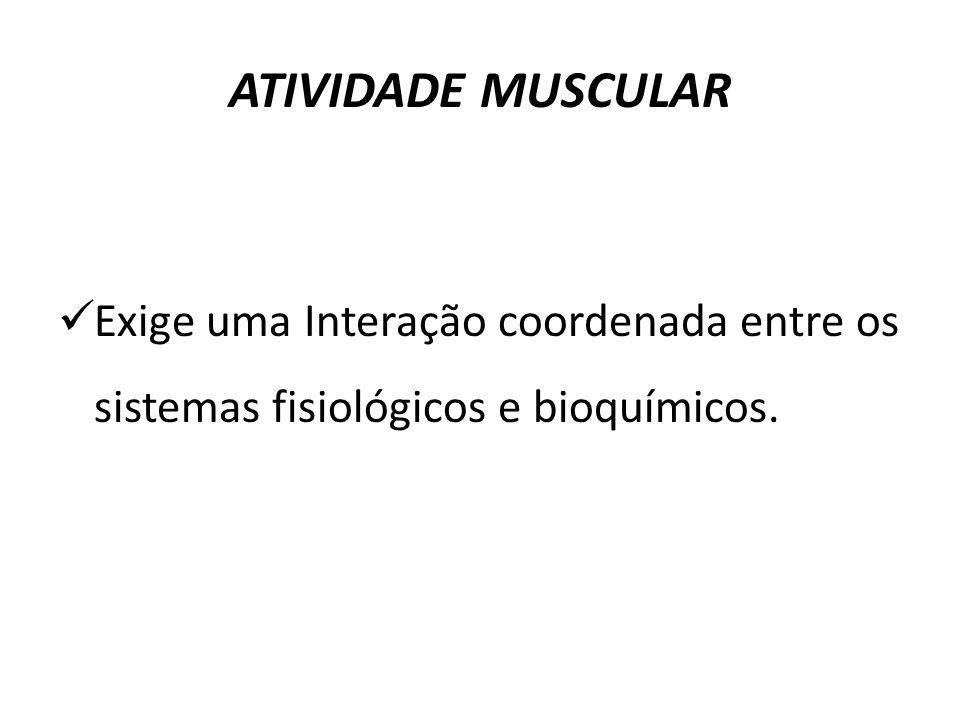 ATIVIDADE MUSCULAR Exige uma Interação coordenada entre os sistemas fisiológicos e bioquímicos.