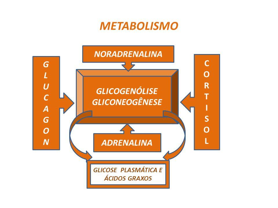 GLICOSE PLASMÁTICA E ÁCIDOS GRAXOS