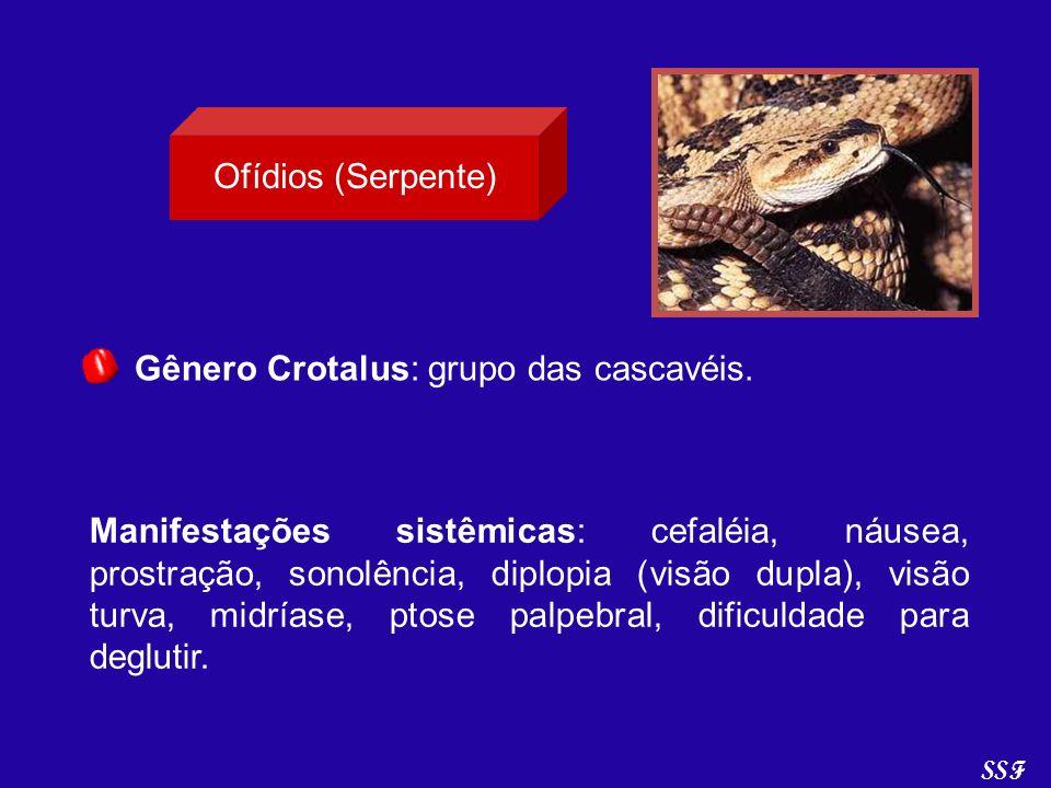 Gênero Crotalus: grupo das cascavéis.
