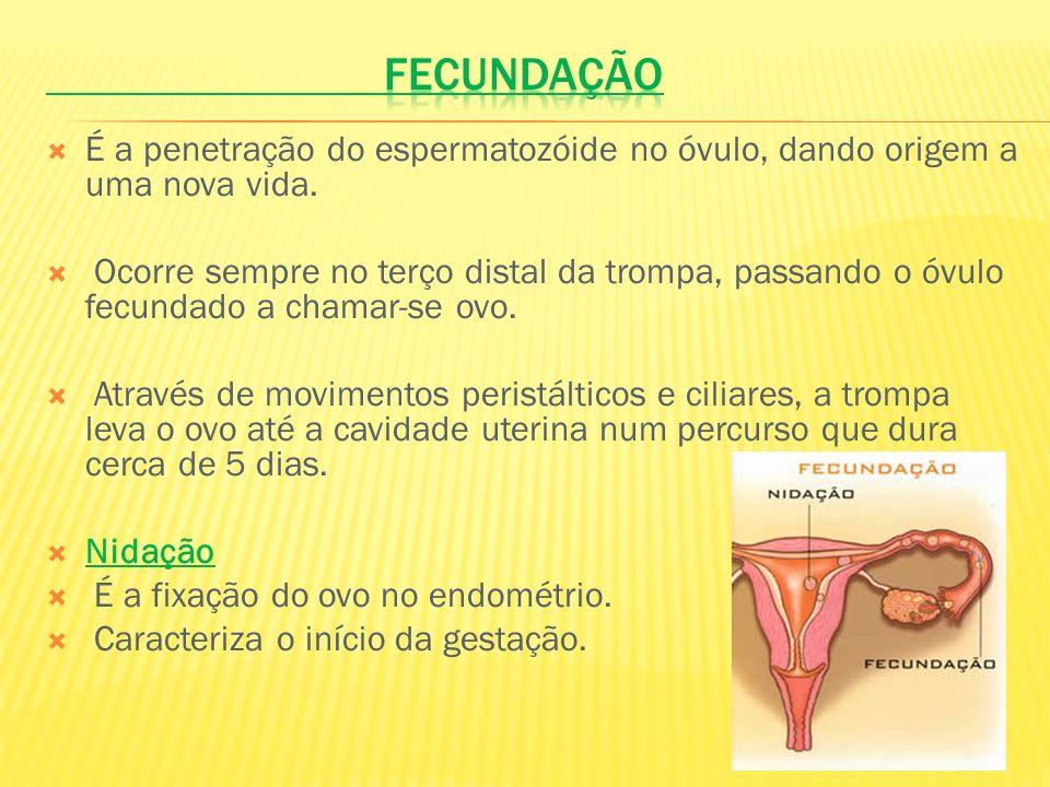 Fecundação É a penetração do espermatozóide no óvulo, dando origem a uma nova vida.