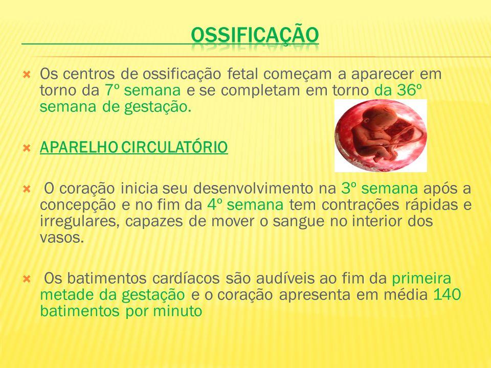OSSIFICAÇÃO Os centros de ossificação fetal começam a aparecer em torno da 7º semana e se completam em torno da 36º semana de gestação.