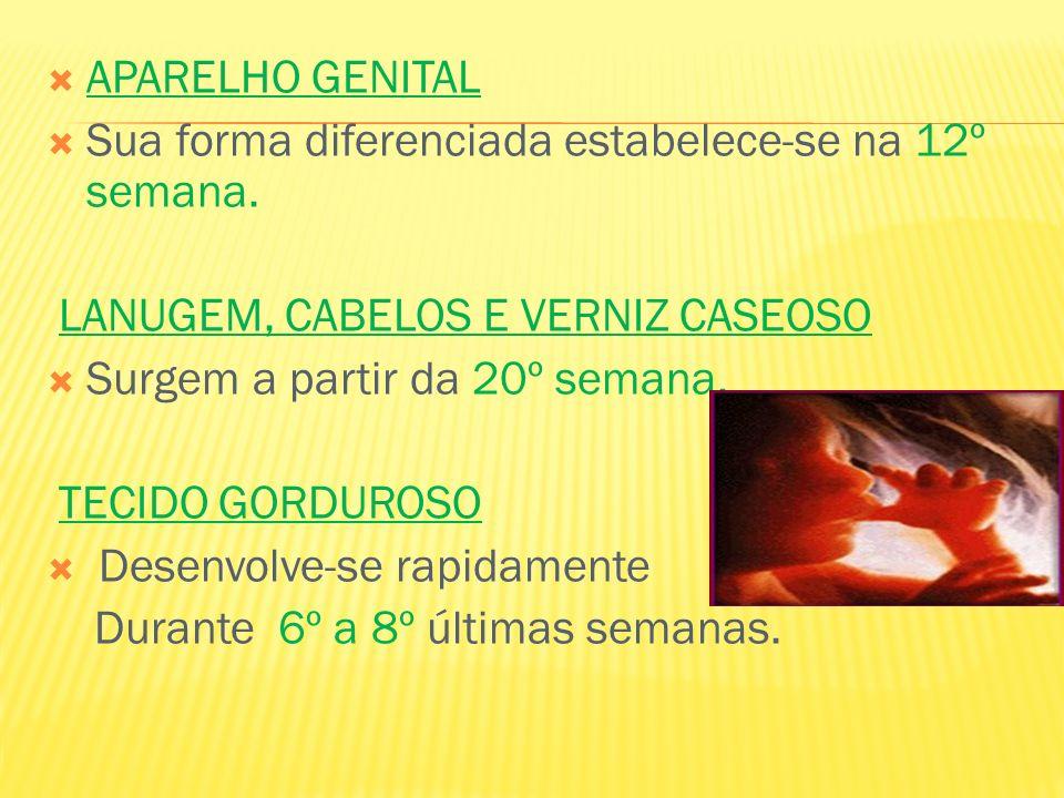 APARELHO GENITAL Sua forma diferenciada estabelece-se na 12º semana. LANUGEM, CABELOS E VERNIZ CASEOSO.