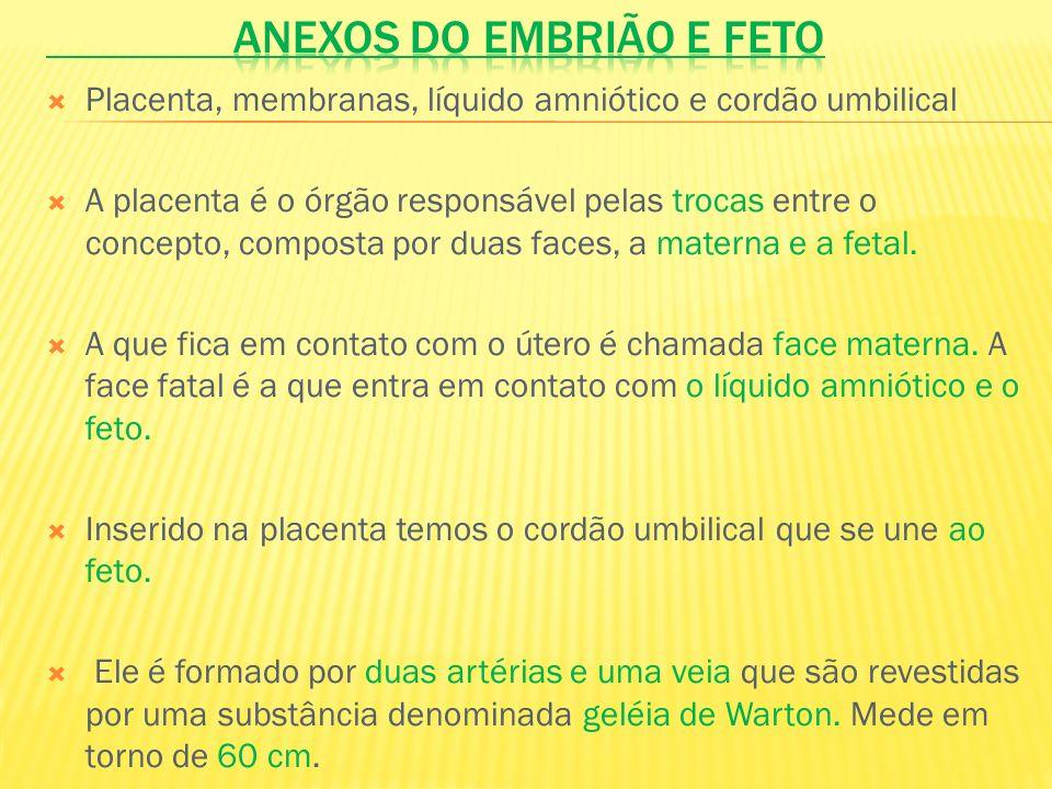 ANEXOS DO EMBRIÃO E FETO