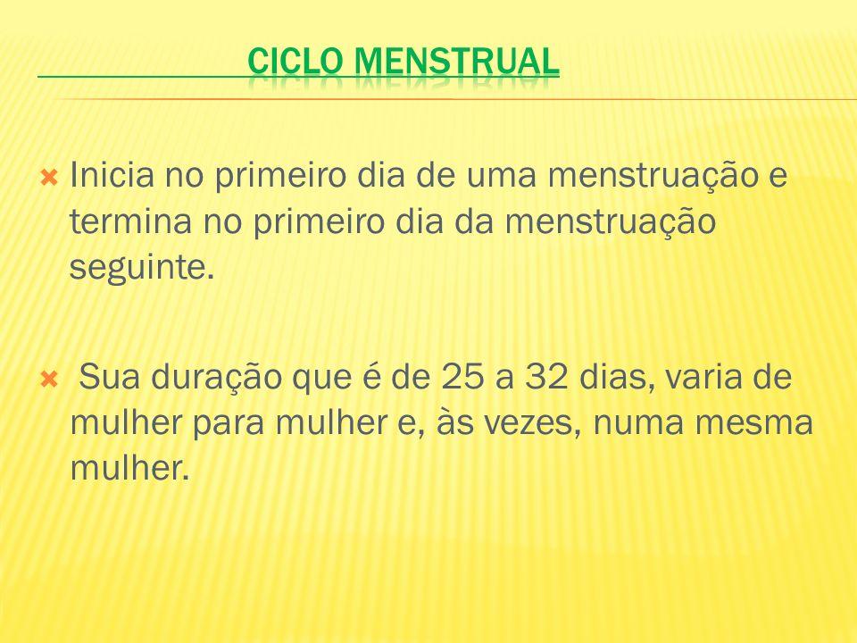 Ciclo menstrual Inicia no primeiro dia de uma menstruação e termina no primeiro dia da menstruação seguinte.