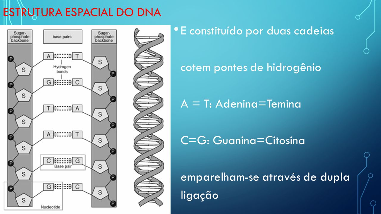 estrutura espacial do DNA