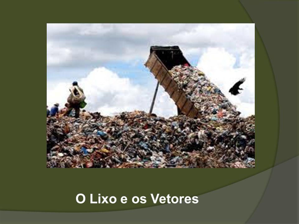 O Lixo e os Vetores