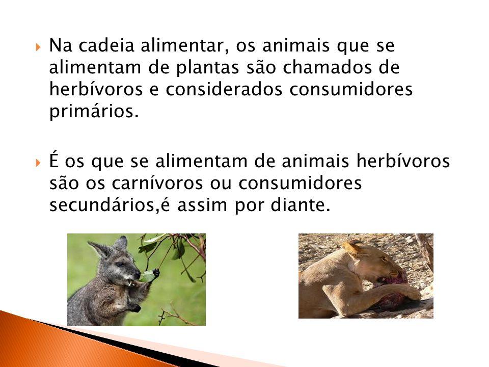Na cadeia alimentar, os animais que se alimentam de plantas são chamados de herbívoros e considerados consumidores primários.