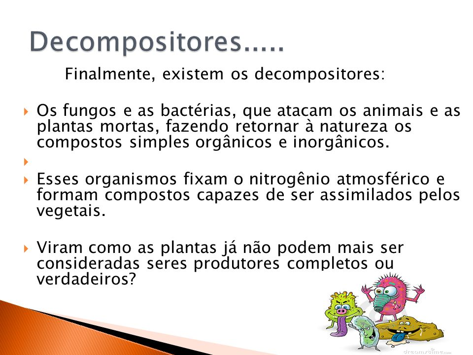 Decompositores..... Finalmente, existem os decompositores: