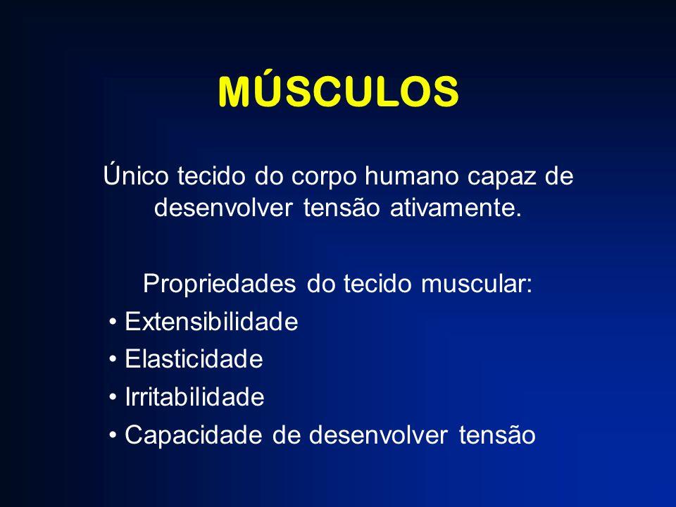 MÚSCULOS Único tecido do corpo humano capaz de desenvolver tensão ativamente. Propriedades do tecido muscular: