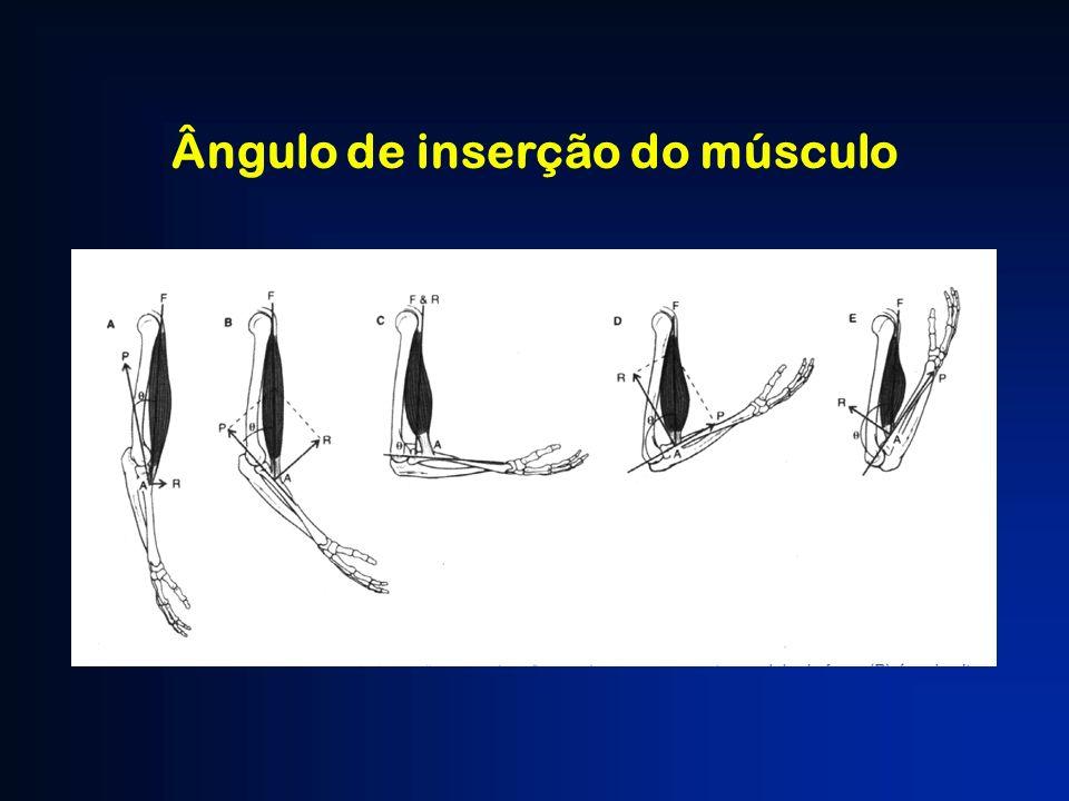 Ângulo de inserção do músculo