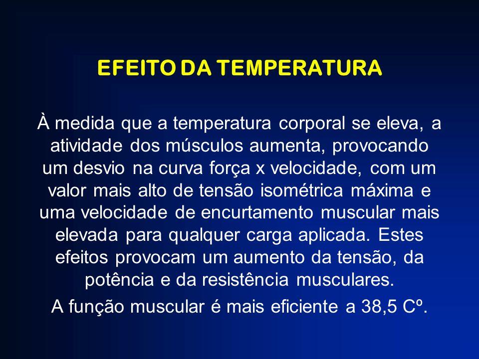 A função muscular é mais eficiente a 38,5 Cº.