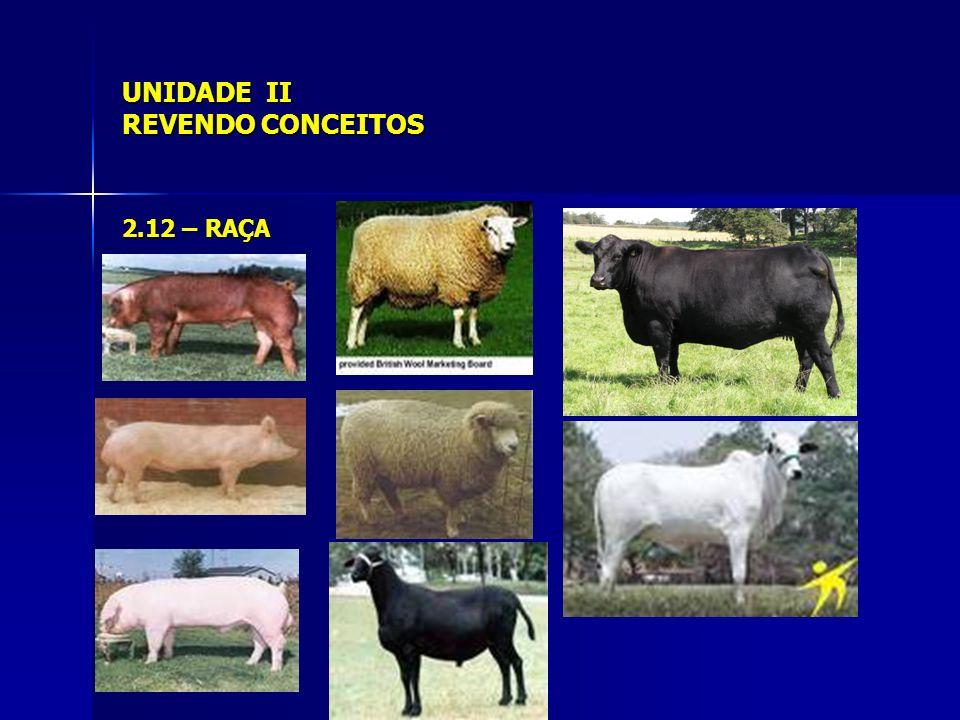 UNIDADE II REVENDO CONCEITOS