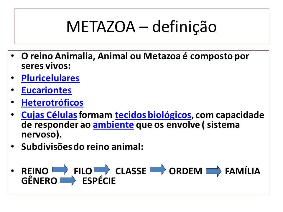 METAZOA – definição O reino Animalia, Animal ou Metazoa é composto por seres vivos: Pluricelulares.