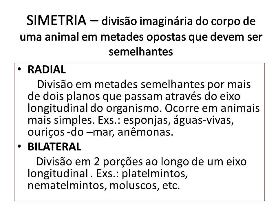 SIMETRIA – divisão imaginária do corpo de uma animal em metades opostas que devem ser semelhantes