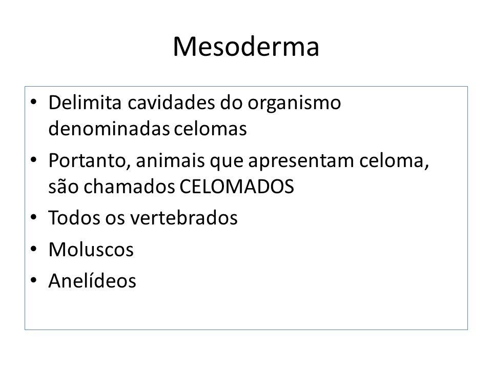 Mesoderma Delimita cavidades do organismo denominadas celomas
