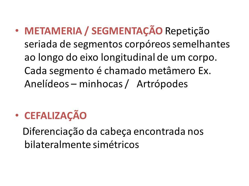 METAMERIA / SEGMENTAÇÃO Repetição seriada de segmentos corpóreos semelhantes ao longo do eixo longitudinal de um corpo. Cada segmento é chamado metâmero Ex. Anelídeos – minhocas / Artrópodes