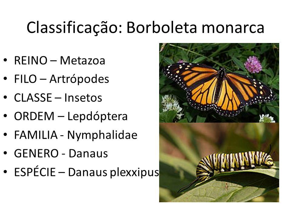 Classificação: Borboleta monarca