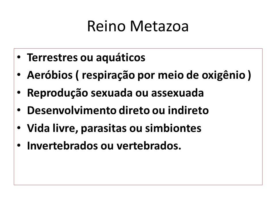 Reino Metazoa Terrestres ou aquáticos
