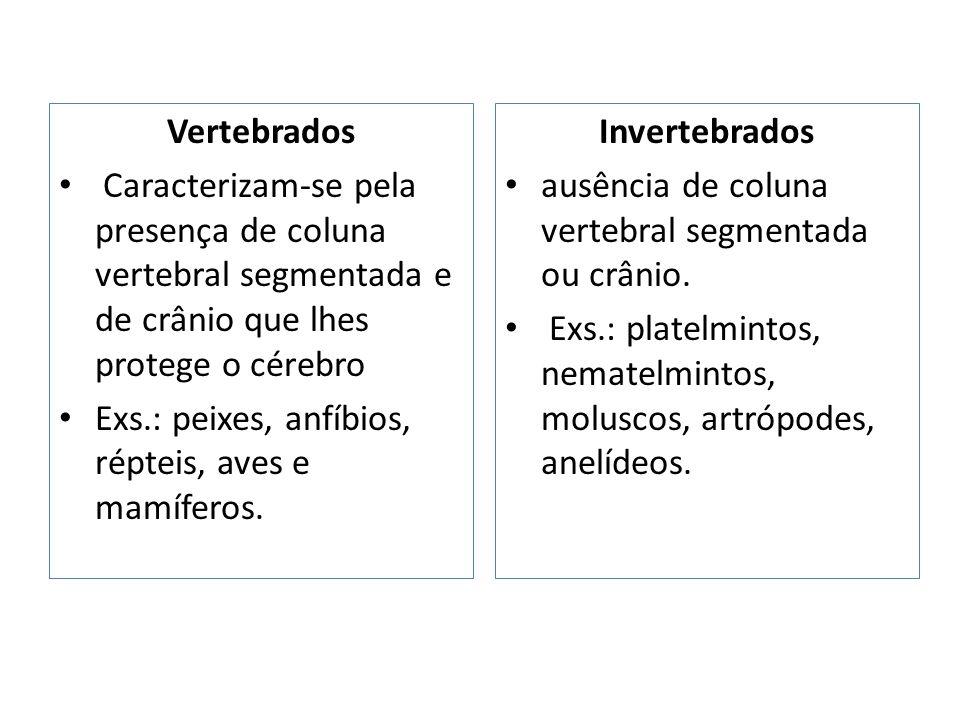Vertebrados Caracterizam-se pela presença de coluna vertebral segmentada e de crânio que lhes protege o cérebro.