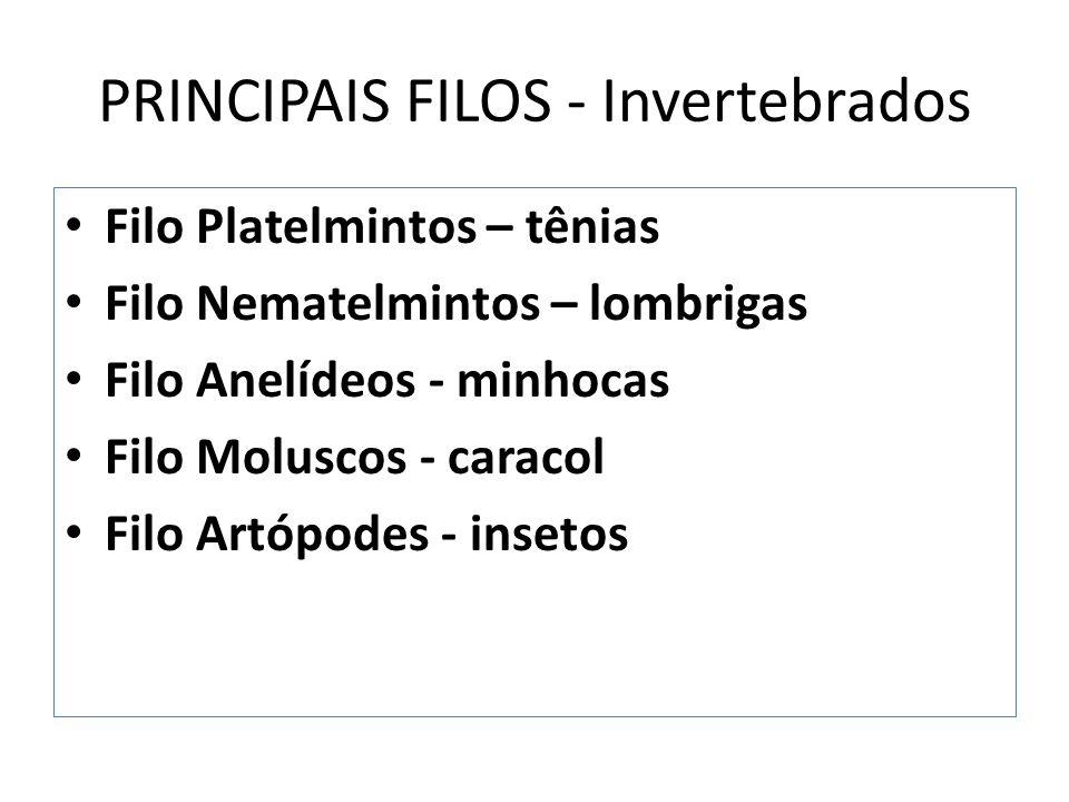 PRINCIPAIS FILOS - Invertebrados