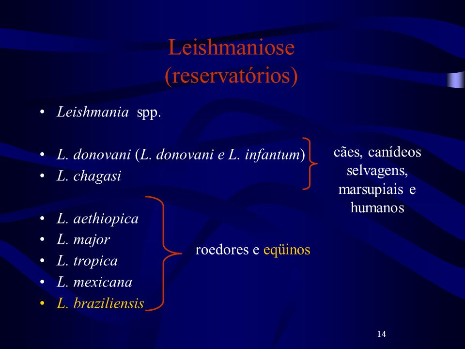Leishmaniose (reservatórios)