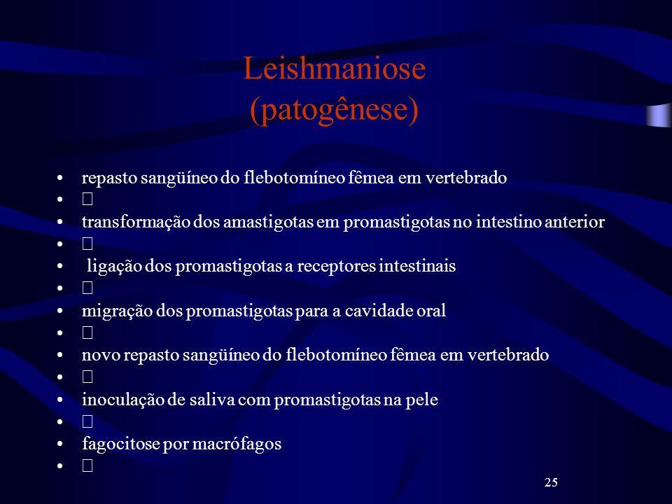 Leishmaniose (patogênese)