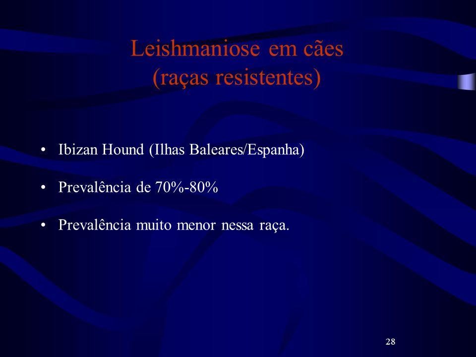 Leishmaniose em cães (raças resistentes)