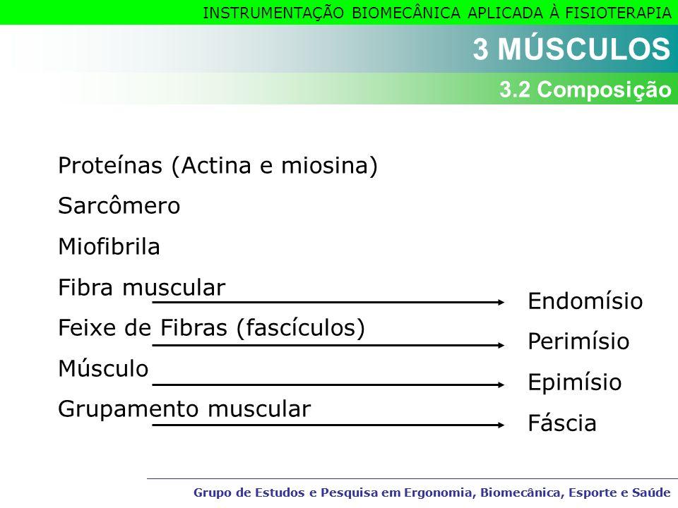 3 MÚSCULOS 3.2 Composição Proteínas (Actina e miosina) Sarcômero