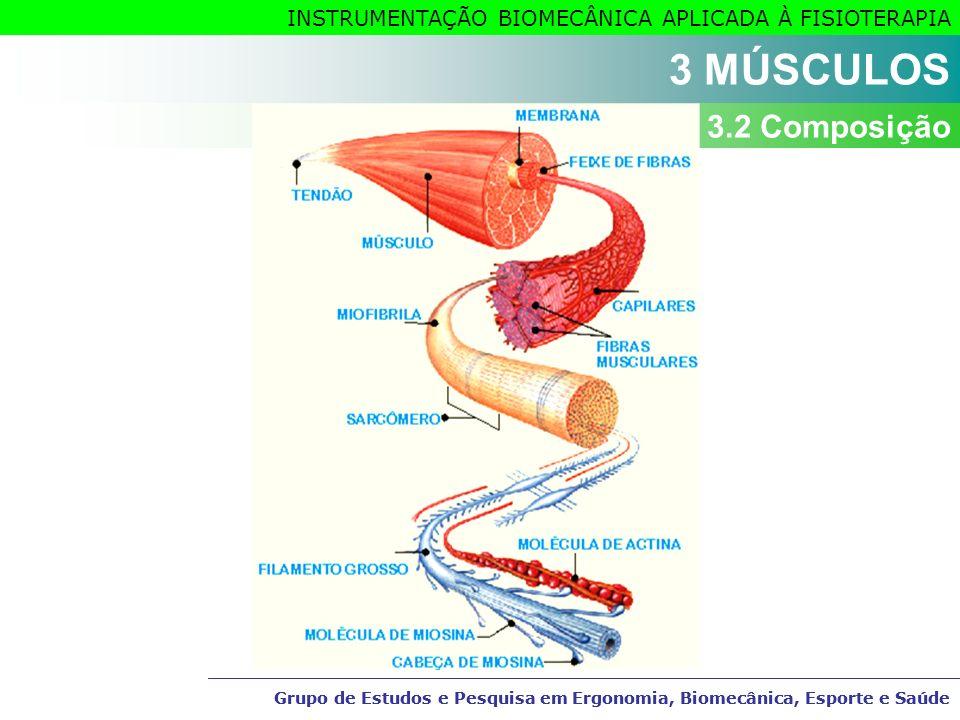3 MÚSCULOS 3.2 Composição Grupo de Estudos e Pesquisa em Ergonomia, Biomecânica, Esporte e Saúde