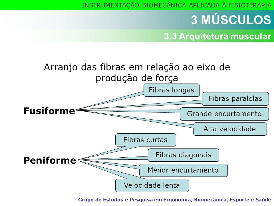 Arranjo das fibras em relação ao eixo de produção de força