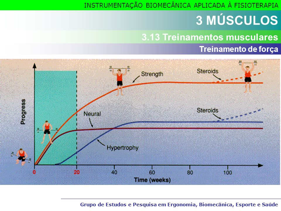 3 MÚSCULOS 3.13 Treinamentos musculares Treinamento de força