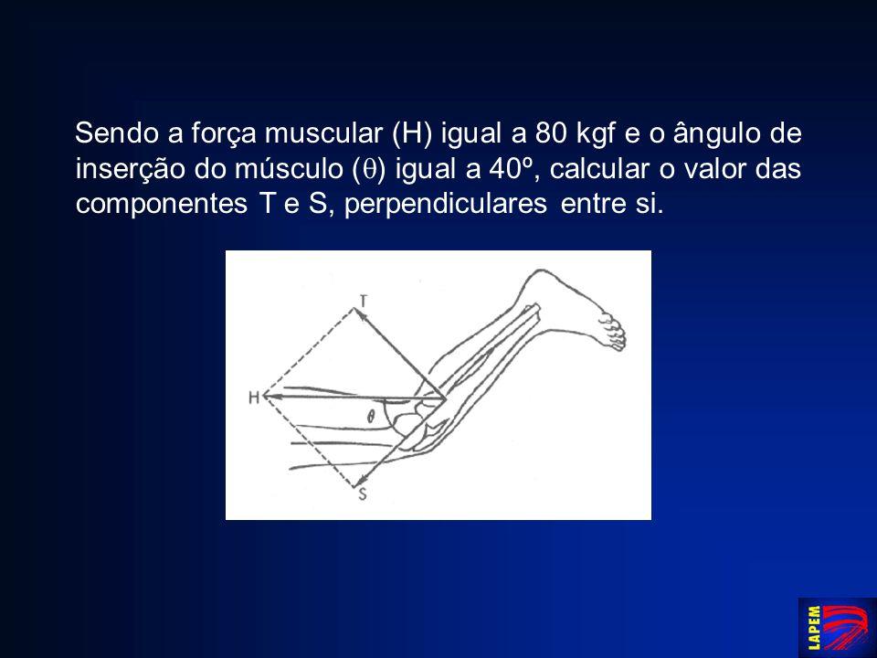 Sendo a força muscular (H) igual a 80 kgf e o ângulo de inserção do músculo () igual a 40º, calcular o valor das componentes T e S, perpendiculares entre si.