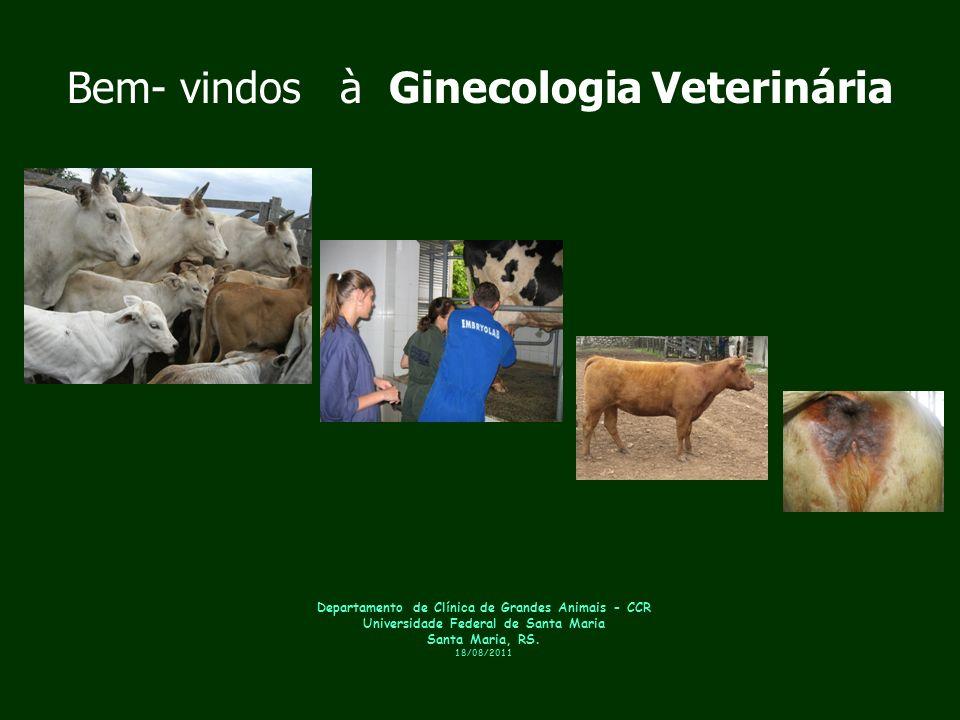 Bem- vindos à Ginecologia Veterinária