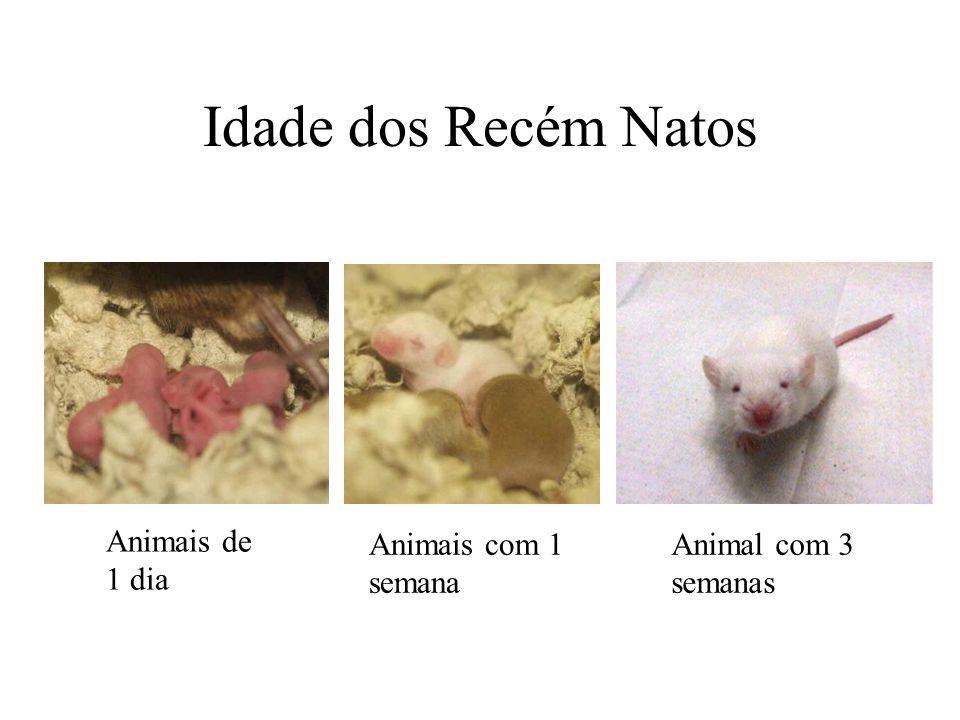 Idade dos Recém Natos Animais de 1 dia Animais com 1 semana