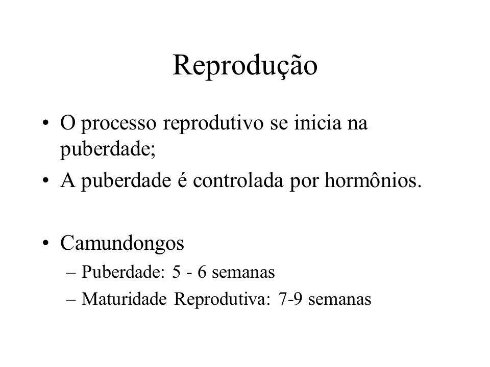 Reprodução O processo reprodutivo se inicia na puberdade;