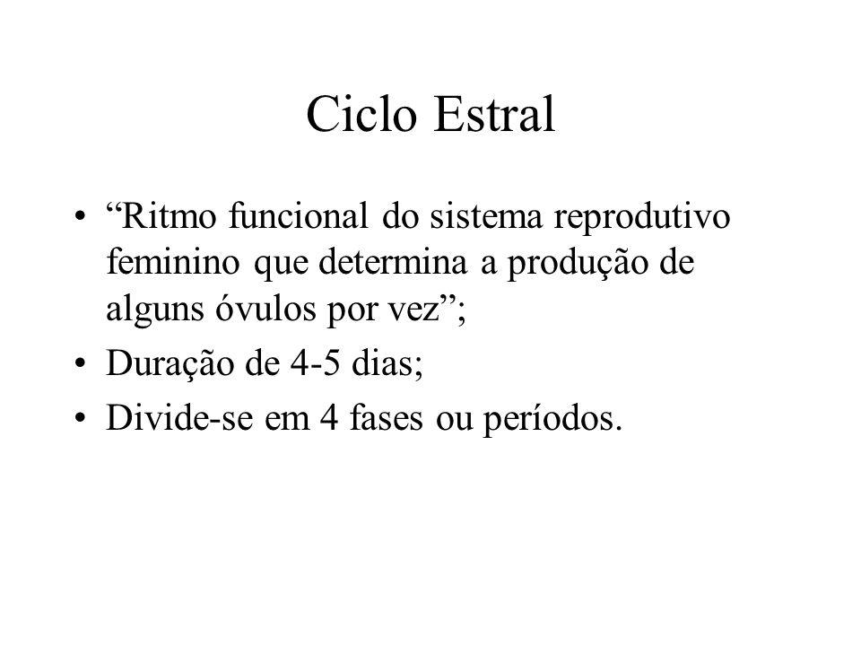Ciclo Estral Ritmo funcional do sistema reprodutivo feminino que determina a produção de alguns óvulos por vez ;