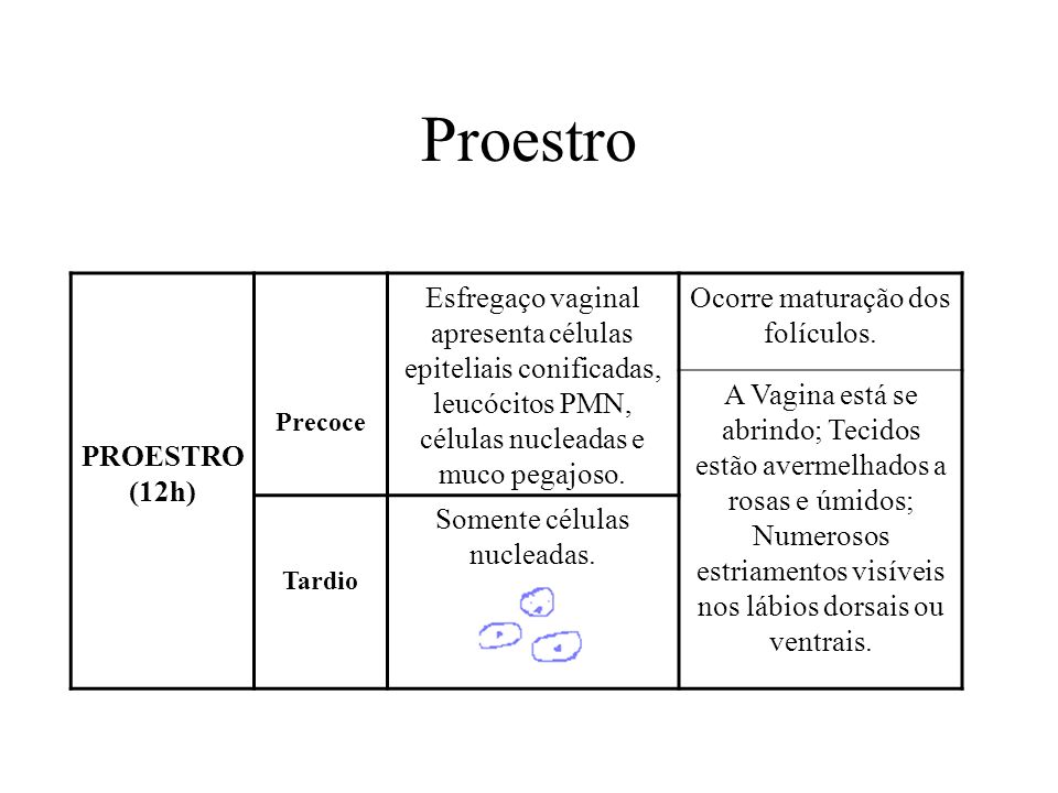 Proestro PROESTRO. (12h) Precoce. Esfregaço vaginal apresenta células epiteliais conificadas, leucócitos PMN, células nucleadas e muco pegajoso.